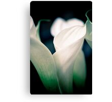 Lily 11 Canvas Print