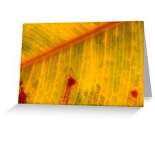 autumn shots Greeting Card