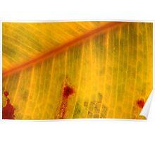autumn shots Poster