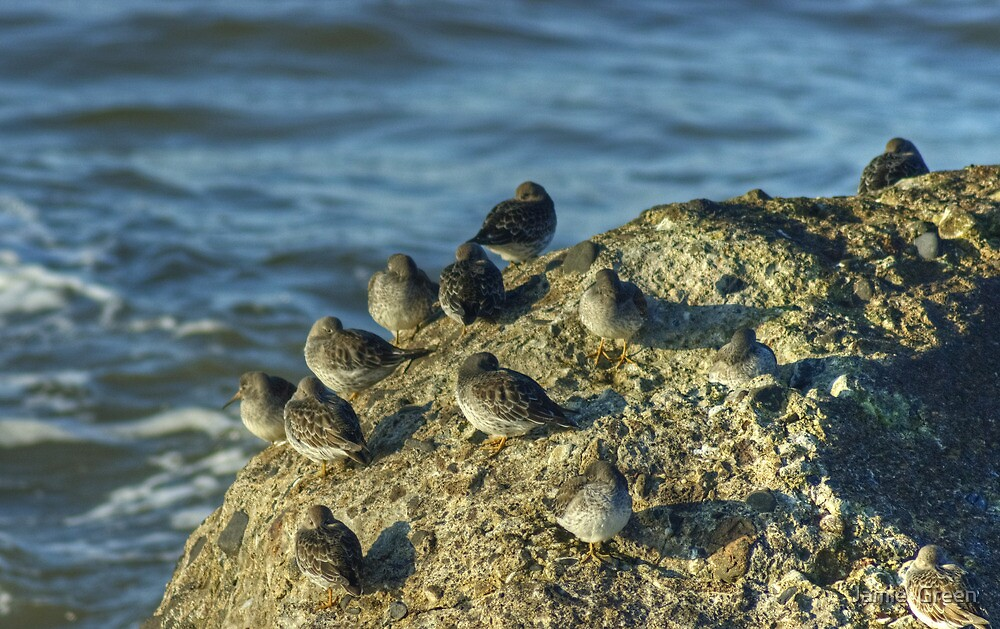 High Tide Roost by Jamie  Green