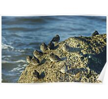 High Tide Roost Poster