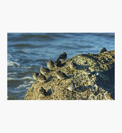 High Tide Roost Photographic Print