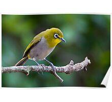 Today 16th Nov  Bird  2 Poster