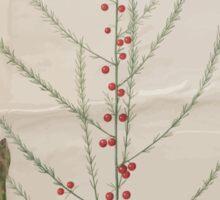 Johannes Simon Holtzbecher Asparagus officinalis Sticker