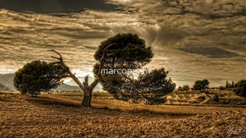 Vista by marcopuch