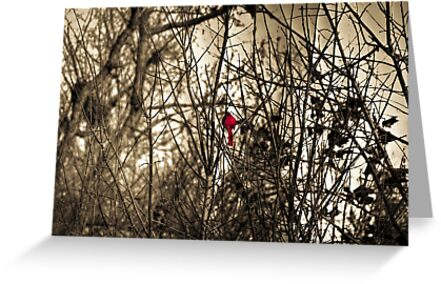Cardinal in Hiding by David Owens