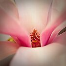 Magnolia 4 by imagesbyjillian