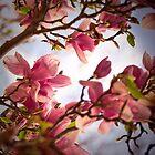 Magnolia 6 by imagesbyjillian
