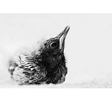 Portrait of a Baby Thrush Photographic Print