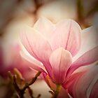 Magnolia 7 by imagesbyjillian