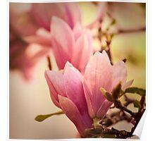 Magnolia 10 Poster