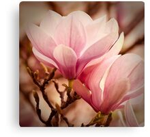 Magnolia 11 Canvas Print