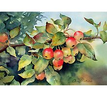 Green crab apples Photographic Print