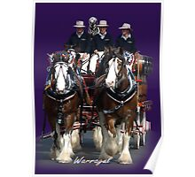CUB Clydesdales in Warragul, Gippsland Poster