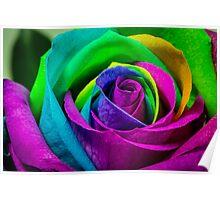 Multi Coloured Rose Poster