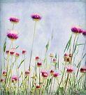 meadow by Teresa Pople