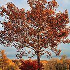 Autumn Sycamore And Burning Bush by Carolyn  Fletcher