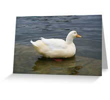 elegant water duck Greeting Card