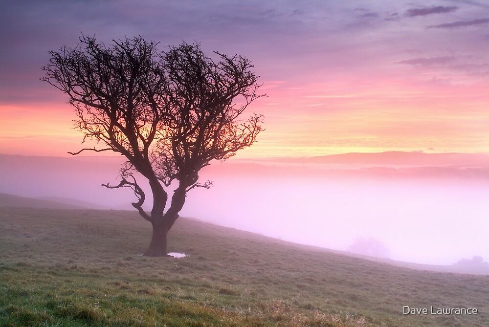 Misty Sunrise, near Kendal, Cumbria by Dave Lawrance