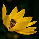 Yellow by Trevor Kersley