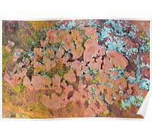 lichen on the mountain Poster