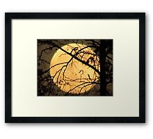 Peek a Boo - how can I not see you Framed Print