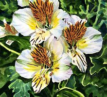 White and Gold Alstroemeria by marksatchwillart