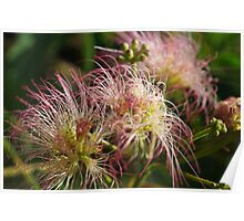 Hairy Flowers Poster