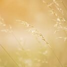 Golden Light by lorrainem