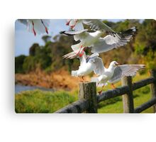 Seagull Cacophony Canvas Print
