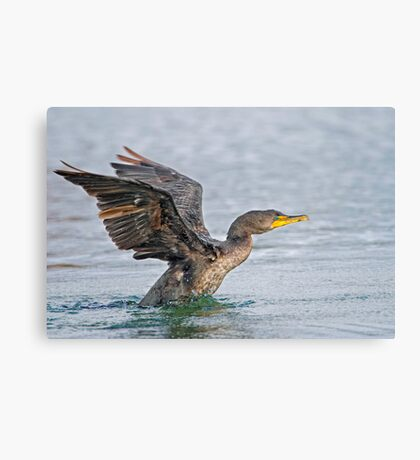Take off, eh! Canvas Print