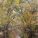 Fall Stream by JGetsinger