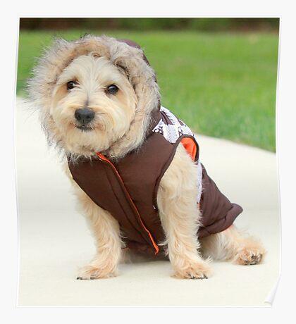 life as a doggy Eskimo Poster