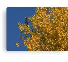 Paris - Le cormoran d'automne Canvas Print