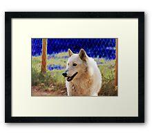 Wolf 3 Framed Print