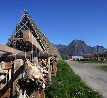Scenic Cod in the Lofoten Islands, Norway by SeeOneSoul