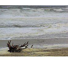 Driftwood 2  Nags Head, NC Photographic Print