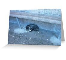 A Purrrfic Cat Nap Greeting Card