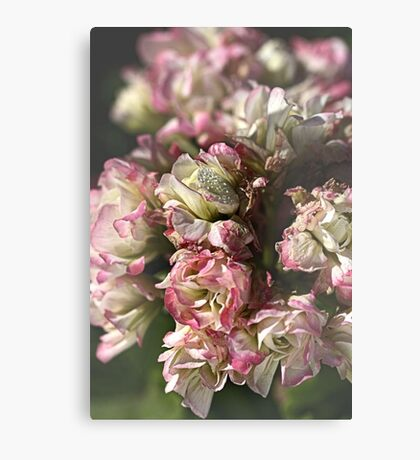 Softly Nature Canvas Print