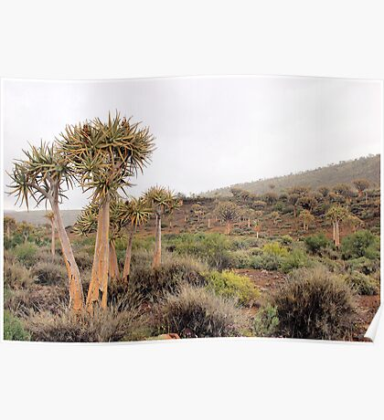 WINTER IN AFRICA - QUIVER TREE FOREST, NAMAQUA Poster