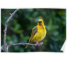 Today 17th Nov Bird 1 Poster