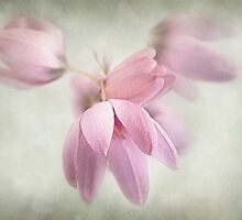 Pink Bells by Dianne English