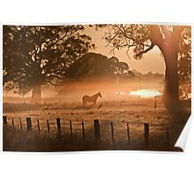 Morning Mist and Horse Poster