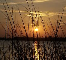 Ashley River sunset by keeganspera