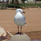 Out & About - Townsville, Queensland by BreeDanielle