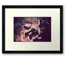 warm fur Framed Print