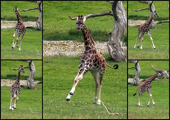 Frolicking by Clive