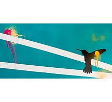 Amy Redmond - Bird Photographic Print