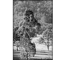 a country scene Photographic Print