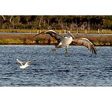 Pelican - Landing Gear Activated ;-) Photographic Print
